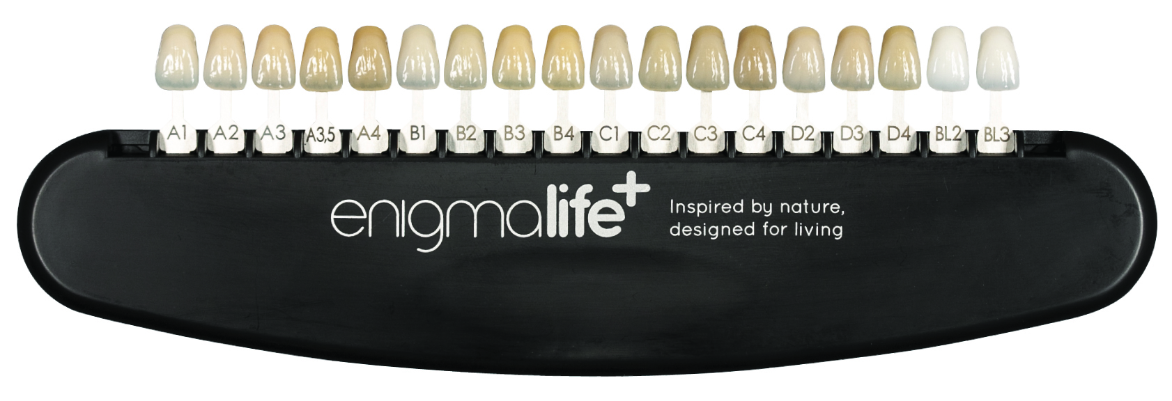 photo regarding Tooth Shade Chart Printable titled Enigma Daily life - Specification Enamel